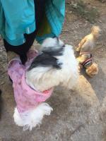 Oblečky pro psy i fenky – foto zákazníků. (2)