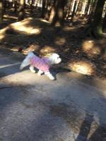 Oblečky pro psy i fenky – foto zákazníků. (3)