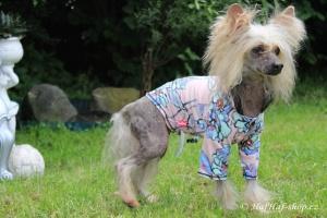 FOTO – Oblečky pro psy – teplá mikina z měkoučké pleteninové látky FLOWERS (2)