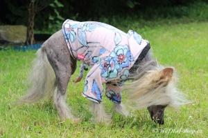 FOTO – Oblečky pro psy – teplá mikina z měkoučké pleteninové látky FLOWERS