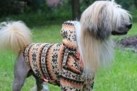 FOTO – Obleček pro psy i fenky – světle hnědá mikina se vzorem od For My Dogs (2)