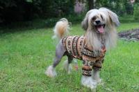 FOTO – Obleček pro psy i fenky – světle hnědá mikina se vzorem od For My Dogs (3)