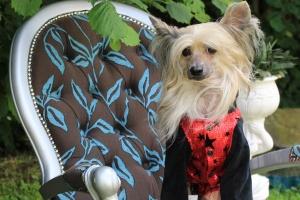 FOTO – Obleček pro psy i fenky – teplá mikina s velurovými rukávy a kapucí, černo-červená (2)