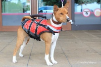 Plovací vesta pro psy Non-stop Dogwear je kvalitní a funkční plovací vesta, která neomezuje v pohybu. Používá materiály z nejmodernějších plovacích vest určených pro lidi (2).