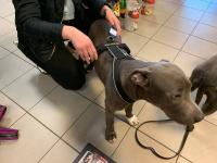 Univerzální postroj pro psy – pro vedení psa na vodítku i pro sportovní aktivity. Foto zákazníků. (2)