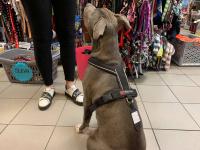Univerzální postroj pro psy – pro vedení psa na vodítku i pro sportovní aktivity. Foto zákazníků. (3)