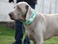 Ergonomický obojek pro psy HURTTA z prodyšného polyesteru se zvýšenou odolností vůči povětrnostním vlivům. Barva zelená, vzor Park Camo. (FOTO)