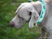 Ergonomický obojek pro psy HURTTA z prodyšného polyesteru se zvýšenou odolností vůči povětrnostním vlivům. Barva zelená, vzor Park Camo. (FOTO 2)