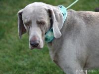 Ergonomický obojek pro psy HURTTA z prodyšného polyesteru se zvýšenou odolností vůči povětrnostním vlivům. Barva zelená, vzor Park Camo. (FOTO 3)