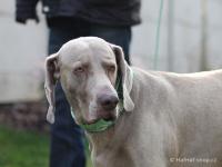 Ergonomický obojek pro psy HURTTA z prodyšného polyesteru se zvýšenou odolností vůči povětrnostním vlivům. Barva zelená, vzor Park Camo. (FOTO 7)