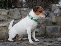 Ergonomický obojek pro psy HURTTA z prodyšného polyesteru se zvýšenou odolností vůči povětrnostním vlivům. Pevná spona, reflexní prvky, nastavitelná délka. Barva zelená, vzor Park Camo. (FOTO 4)
