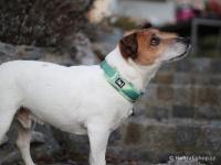 Ergonomický obojek pro psy HURTTA z prodyšného polyesteru se zvýšenou odolností vůči povětrnostním vlivům. Pevná spona, reflexní prvky, nastavitelná délka. Barva zelená, vzor Park Camo. (FOTO)
