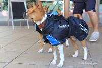 Luxusní zimní bunda pro psy poskytující dokonalý teplotní a pocitový komfort. Ripstop šusťákovina, mikrofleecová podšívka (5).