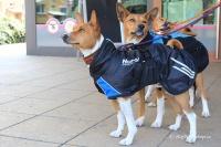Luxusní zimní bunda pro psy poskytující dokonalý teplotní a pocitový komfort. Ripstop šusťákovina, mikrofleecová podšívka (6).