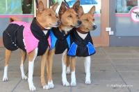 Luxusní zimní bunda pro psy poskytující dokonalý teplotní a pocitový komfort. Ripstop šusťákovina, mikrofleecová podšívka (7).