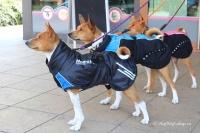 Luxusní zimní bunda pro psy poskytující dokonalý teplotní a pocitový komfort. Ripstop šusťákovina, mikrofleecová podšívka (8).
