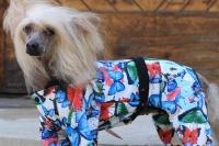 FOTO – Obleček pro psy i fenky – overal BUTERFLIES (2)