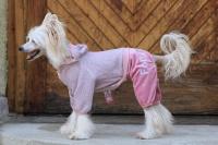 FOTO – Obleček pro psy i fenky – lehoučký pletený overal z veluru (2)