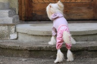 FOTO – Obleček pro psy i fenky – lehoučký pletený overal z veluru (3)