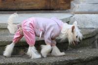 FOTO – Obleček pro psy i fenky – lehoučký pletený overal z veluru (4)