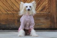 FOTO – Obleček pro psy i fenky – lehoučký pletený overal z veluru (5)