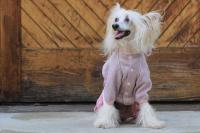 FOTO – Obleček pro psy i fenky – lehoučký pletený overal z veluru (6)