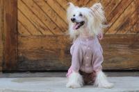 FOTO – Obleček pro psy i fenky – lehoučký pletený overal z veluru (7)