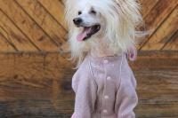 FOTO – Obleček pro psy i fenky – lehoučký pletený overal z veluru (8)