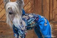FOTO – Obleček pro psy středních a větších plemen – pláštěnka BLUE LEAVES, světle modrá (2)