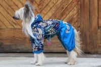 FOTO – Obleček pro psy středních a větších plemen – pláštěnka BLUE LEAVES, světle modrá (5)