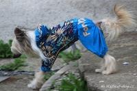 FOTO – Obleček pro psy středních a větších plemen – pláštěnka BLUE LEAVES, světle modrá (6)