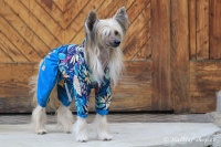 FOTO – Obleček pro psy středních a větších plemen – pláštěnka BLUE LEAVES, světle modrá (7)