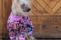 FOTO – Obleček pro psy – světle fialová pláštěnka pro fenky ForMyDogs LILLAC (2)
