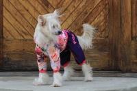 FOTO – Obleček pro psy – pláštěnka pro fenky malých až středních plemen od For My Dogs (2)