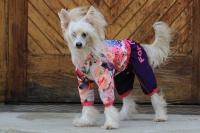 FOTO – Obleček pro psy – pláštěnka pro fenky malých až středních plemen od For My Dogs