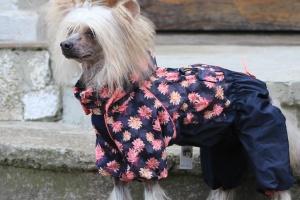 FOTO – Oblečky pro psy i fenky – inovovaná, super komfortní a funkční pláštěnka pro fenky PINK FLOWER (2)