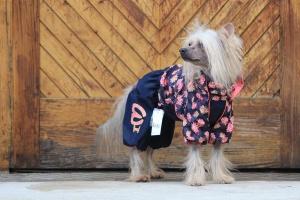 FOTO – Oblečky pro psy i fenky – inovovaná, super komfortní a funkční pláštěnka pro fenky PINK FLOWER (3)