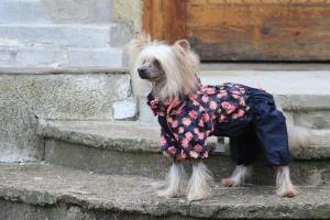 FOTO – Oblečky pro psy i fenky – inovovaná, super komfortní a funkční pláštěnka pro fenky PINK FLOWER