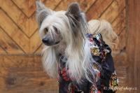 FOTO – Pláštěnka pro psy od ForMyDogs, černá s potiskem (7)