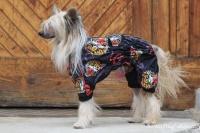 FOTO – Pláštěnka pro psy od ForMyDogs, černá s potiskem