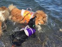 Funkční plovací vesta pro psy HURTTA s dokonalým střihem, ultralehkými plováky a robustní rukojetí pro vyzvednutí psa z vody. Barva oranžová, vzor CAMO. (2)