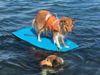 Funkční plovací vesta pro psy HURTTA s dokonalým střihem, ultralehkými plováky a robustní rukojetí pro vyzvednutí psa z vody. Barva oranžová, vzor CAMO. (3)
