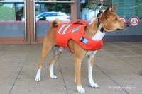 Plovací vesta pro psy RUFFWEAR s konstrukcí promyšlenou do nejmenších detailů – reflexní prvky, očko na vodítko, rukojeť pro vyzvednutí psa z vody (6).