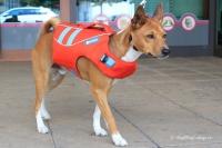 Plovací vesta pro psy RUFFWEAR s konstrukcí promyšlenou do nejmenších detailů – reflexní prvky, očko na vodítko, rukojeť pro vyzvednutí psa z vody (7).
