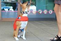 Plovací vesta pro psy RUFFWEAR s konstrukcí promyšlenou do nejmenších detailů – reflexní prvky, očko na vodítko, rukojeť pro vyzvednutí psa z vody (8).