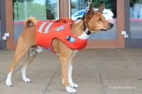 Plovací vesta pro psy RUFFWEAR s konstrukcí promyšlenou do nejmenších detailů – reflexní prvky, očko na vodítko, rukojeť pro vyzvednutí psa z vody (5).