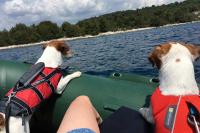 Plovací vesty pro psy – Max a Benny na člunu v Chorvatsku. (2)