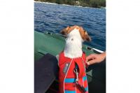 Plovací vesty pro psy – Max a Benny na člunu v Chorvatsku. (3)