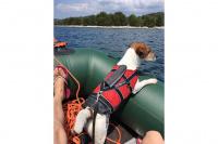 Plovací vesty pro psy – Max a Benny na člunu v Chorvatsku. (4)