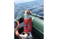 Plovací vesty pro psy – Max a Benny na člunu v Chorvatsku. (5)
